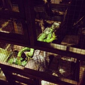 La iguana de MaggieChoo
